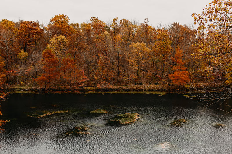 Lake and fall trees