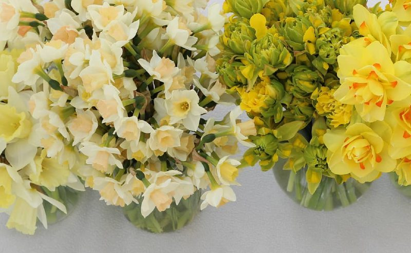 Mix of daffodils from Flint Creek Flower Farm
