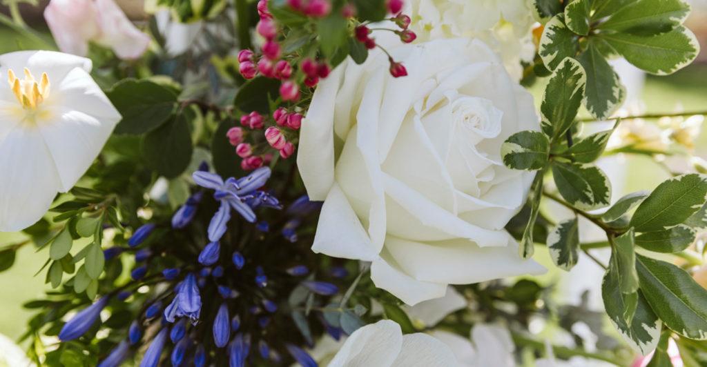 Close-up of springtime flowers